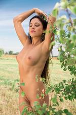 Diana Dulce 03